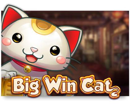 big-win-cat slot review